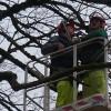 Elagage de branches à Larnod le 26 janvier 2012